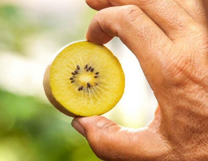 «Καλπάζει» το κιτρινόσαρκο ακτινίδιο στη Β. Αμερική