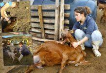 Οι 3 αδερφές τέταρτης γενιάς κτηνοτρόφοι από το Ελληνόκαστρο Τρικάλων
