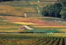Γαλλία: Η Βουργουνδία συντηρεί και αποκαθιστά την αμπελουργική της κληρονομιά