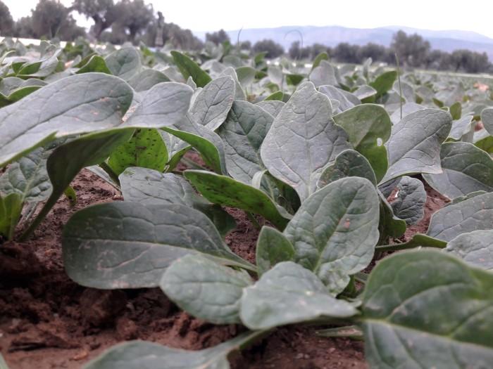 amoratis-sigxronos-laxanika