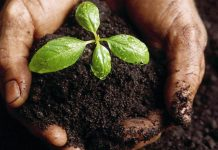 biopesticides-fitofarmaka