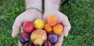 φρούτα στο χέρι