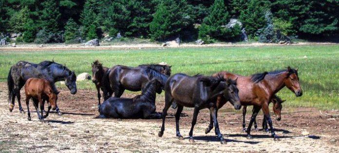Και 7ο άλογο βρέθηκε πυροβολημένο στην Παραμυθιά