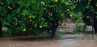Μεγάλη καταστροφή στην Ηλεία από την βροχόπτωση – Πλημμύρισε ο κάμπος του Αλφειού