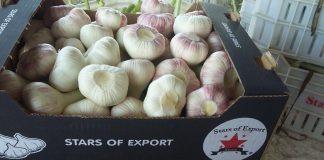 Προβληματισμός για τις τιμές του σκόρδου στην παγκόσμια αγορά