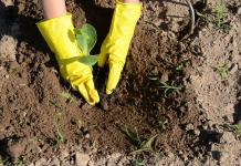 χέρια φυτέουν στο χωράφι