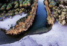 Σπάνια εικόνα από το χιονισμένο Φοινικόδασος της Πρέβελης στην Κρήτη