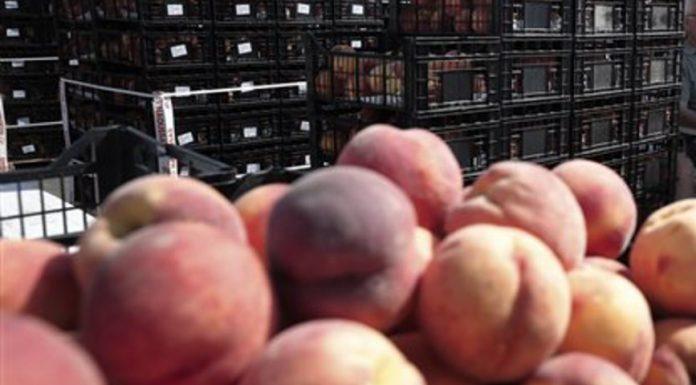 Αλλαγές για τη χορήγηση της συνδεδεμένης για σπόρους σποράς και συμπύρηνο ροδάκινο προς χυμοποίηση
