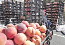 Aποζημιώνονται με de minimis και οι παραγωγοί συμπύρηνων ροδάκινων
