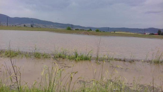 Αγροτικός Σύλλογος Φυτικής Παραγωγής Θηβών: Σοβαρά προβλήματα στις καλλιέργειες λόγω βροχοπτώσεων