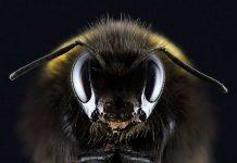 Έρευνα: Οι μέλισσες αγαπούν την κάνναβη