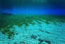 Καθορισμός θαλασσίων περιοχών με λιβάδια Ποσειδωνίας από το ΥΠΑΑΤ