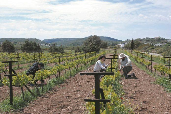 Μέσω ΚΕΠ η χορήγηση του Ειδικού Σήματος Αγροτουρισμού