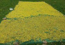 Ιωάννινα: Καλλιέργεια εγκαταλειμένων εκτάσεων αρωματικών φυτών από ανέργους
