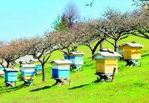 Εγκρίθηκε η υλοποίηση του μελισσοκομικού προγράμματος για το 2019