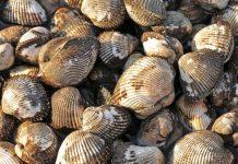 Ενημέρωση ΕΦΕΤ σχετικά με την κατάσχεση ακατάλληλων οστρακοειδών στον Έβρο