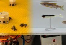 Μέλισσες στην Αυστρία και ψάρια στην Ελβετία «επικοινώνησαν» μεταξύ τους με τη βοήθεια ρομπότ