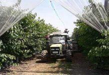 Μεσόβουνο: Ανάπτυξη δενδροκαλλιεργειών και επέκταση αρδευτικού
