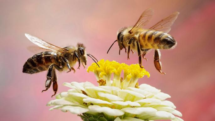 Η μείωση των πληθυσμών των μελισσών αποτελεί πραγματικό λόγο ανησυχίας