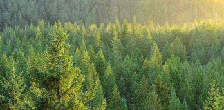 Ηλεία: Μεγάλες καθυστερήσεις στη διαδικασία των δασικών χαρτών
