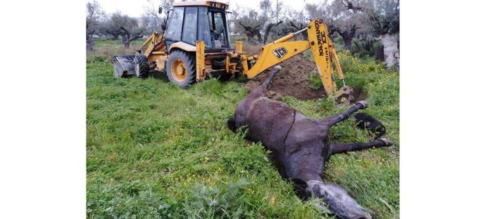 Καλώδιο της ΔΕΗ κόπηκε και τραυμάτισε θανάσιμα άλογο και σκύλο στη Ζάκυνθο