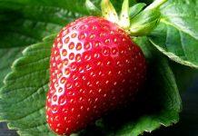 Κερδίζουν έδαφος στην αγορά οι ιταλικές φράουλες
