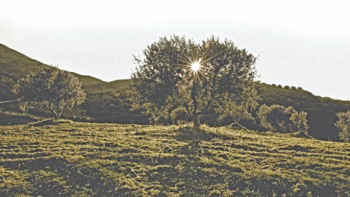 mikres-georgikes-ekmetaleuseis-programmata