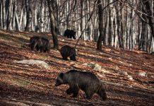 Νυμφαίο: Ξύπνησαν οι αρκούδες από το χειμέριο λήθαργο...όλες εκτός από τη Βέσνα