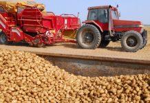 Στους 200.000 τόνους οι εξαγωγές πατάτας Αιγύπτου προς την ΕΕ