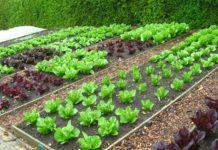 Τρίπολη: Αιτήσεις για τον δημοτικό λαχανόκηπο