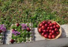Μουσείο Τέχνης Μεταξιού στον Έβρο - Μαθητές έβαψαν αυγά από ριζάρι
