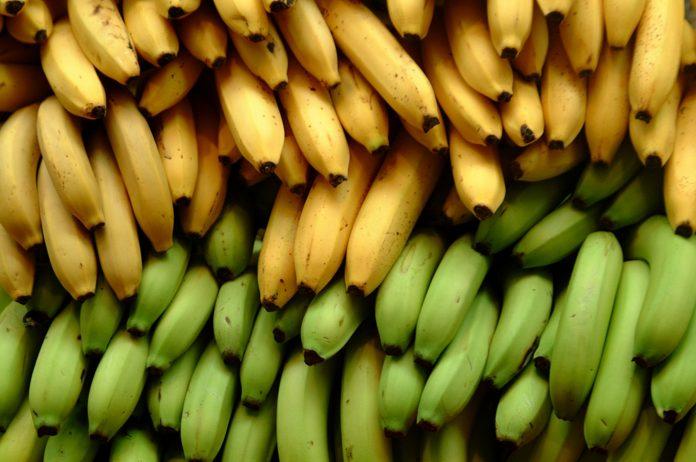 mpanana-kriti (1)