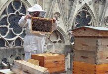 Οι 200 χιλιάδες μέλισσες της Παναγίας των Παρισίων σώθηκαν από την καταστροφή