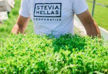 stevia-lamia-sinetairismos