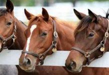 Αμφιλοχία :Πυροβόλησε και σκότωσε άλογο με κυνηγητικό όπλο