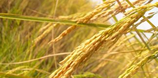 blur-close-up-crops