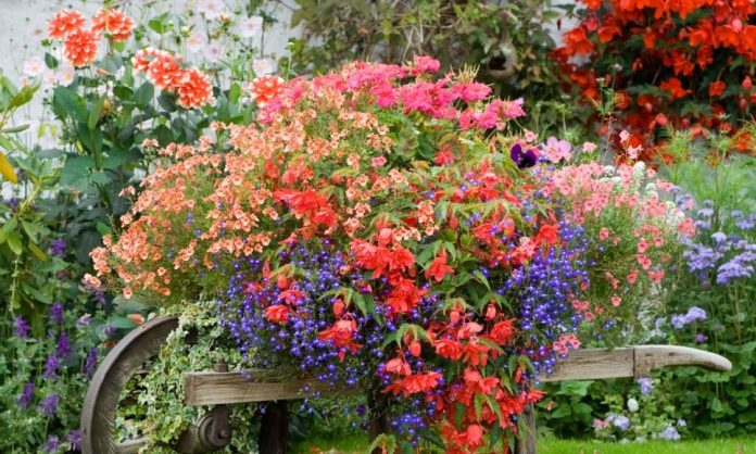 Διαγωνισμός για τον καλύτερο κήπο και το καλύτερο μπαλκόνι στο Δήμο Χανίων