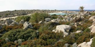 Επίλυση του θέματος της φρυγανικής βλάστησης στους δασικούς χάρτες των ελληνικών νησιών