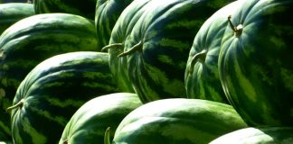 food-fruits-green