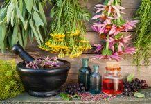Ημερίδα για τα αρωματικά και φαρμακευτικά φυτά της Ηπείρου από το Επιμελητήριο Άρτας