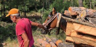 Άγνωστοι έλυσαν 10 άλογα και μουλάρια που βοηθάνε στην υλοτόμηση δέντρων του Σέιχ Σου