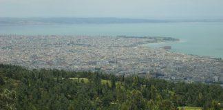 Aρχίζει την Τετάρτη 5 Ιουνίου η αποψίλωση δέντρων που έχουν προσβληθεί από φλοιοφάγο έντομο στο Σέιχ Σου