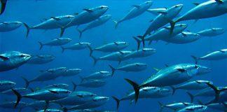 H άνοδος της θερμοκρασίας απειλεί το 17% της ζωής στους ωκεανούς