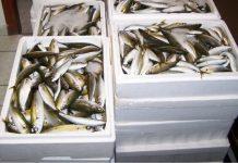 Κατάσχεση ακατάλληλων αλιευμάτων την Α' λαϊκή αγορά του Πειραιά
