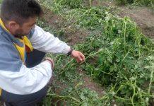 Μεγάλες καταστροφές στο Κ. Νευροκόπι από χαλαζόπτωση