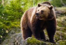 Μέτρα προστασίας από τις αρκούδες