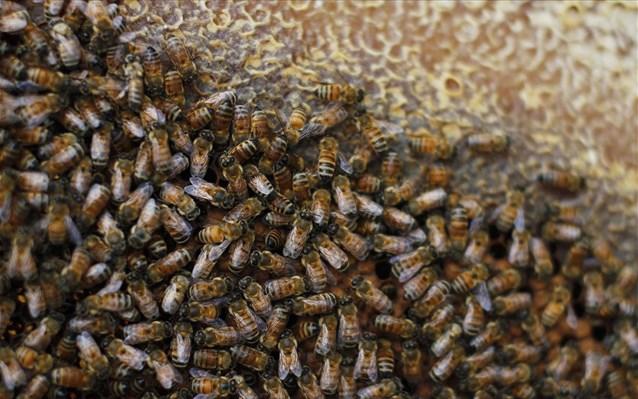 Χάθηκαν περισσότερες από 89.000 αποικίες μελισσών τον περσινό χειμώνα