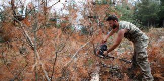 Ξεκίνησε η υλοτόμηση των ξερών δέντρων στο Σέιχ Σου