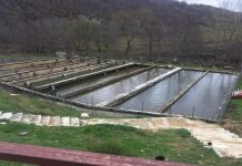 Υδατοκαλλιέργειες πέστροφας στην Ορεινή Ροδόπη