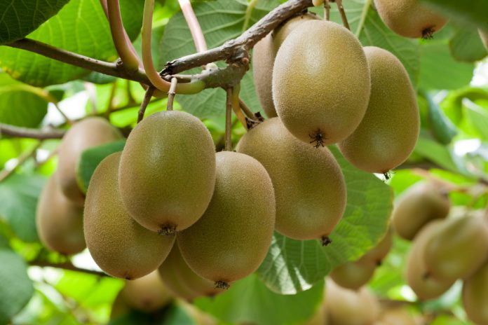 N. Ζηλανδία: Συνεχίζεται η θετική δυναμική της εξαγωγής αγροτικών προϊόντων στην κινεζική αγορά
